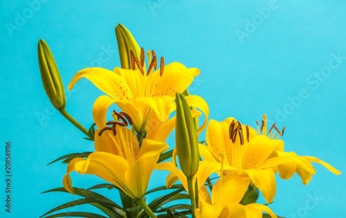 Foto Murales yellow lily flower