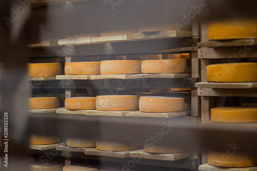 Leinwanddruck Bild hard, pressed, cheese, manufacture, ageing, food, industry, yellow,
