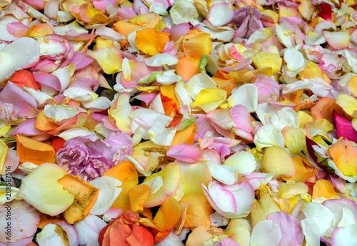 Hintergrund viele Rosenblätter