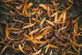 Dry fallen yellow autumn leaves of willow tree on the grass. Abstract background. Macro.