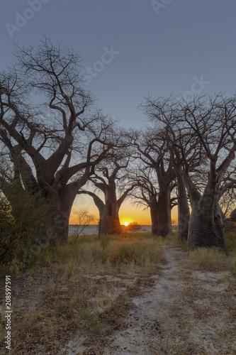 Fotobehang Baobab Sunrise at Baines Baobabs