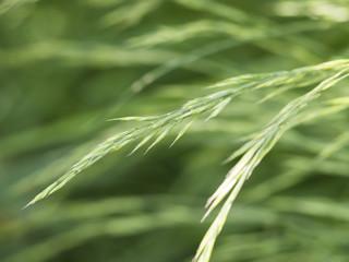 Nahaufnahme von grünen Gräsern