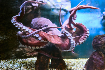 Beautiful Sea World. Sea octopus.