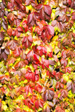 leaves in autumn colors - 208637795