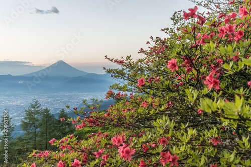 Fotobehang Azalea Japanese Azalea flower and Mountain Fuji in spring season. Azalea or Tsutsuji - Spring Flowers in Japan