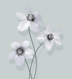 Three white anemones - 208639340