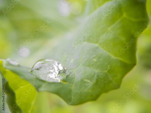 Foto Murales Fotografía de acercamiento de una gota de agua en una hoja de verdura