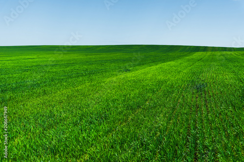 Plexiglas Groene Fresh green wheat field and blue sky ideal for nature background