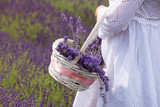 a girl dressed in white gathers a basket of lavender flowers from a field. - 208656369