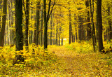 Golden autumnal forest with sunbeams - 208665140