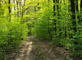 Forest trees. nature green wood sunlight backgrounds - 208666135