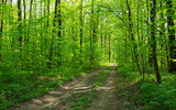 Forest trees. nature green wood sunlight backgrounds - 208668704