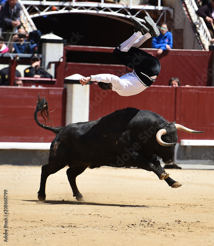 toro negro español