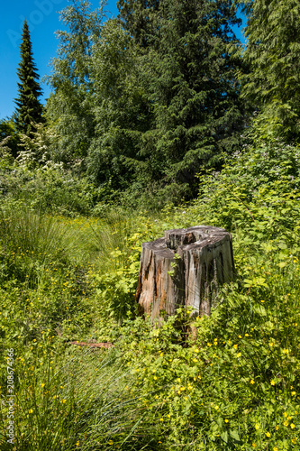 a left off tree trunk in the middle of the forest under the sun - 208674366