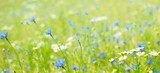 Panoramic Floral Background of flowers field