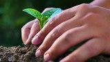 Hand planting a plant - 208677577