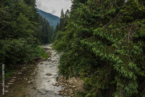 Fotobehang Bergrivier forest mountain nature river landscape