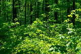 beautiful forest landscape in the morning - 208682508