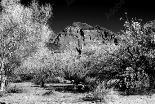 Fotobehang Arizona Infrared Arizona desert mountain and Saguaro