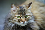Street gray cat sitting - 208684978