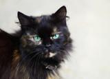 Street black cat sitting - 208684982