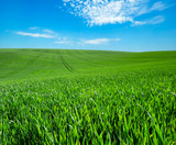 green field and blue sky with clouds - 208686105