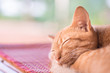 Ginger cat sleeping on the mat, pet at home