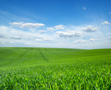 green field and blue sky with clouds - 208692186