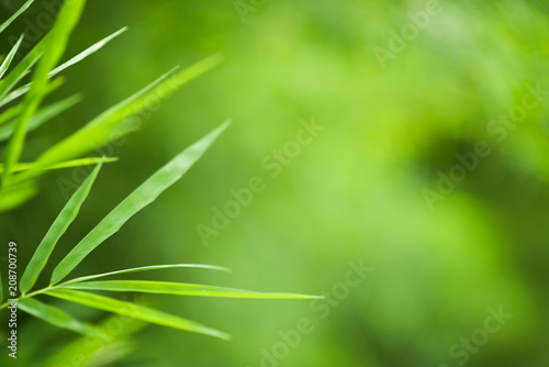 Fotobehang Bamboe Green bamboo leaves background