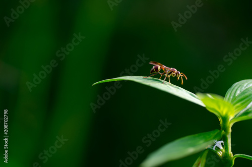 Foto Murales A close up picture of wasp on the leaves