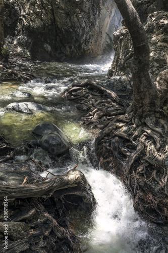 Fotobehang Cyprus Кипр, горы Тороодос. Переплетение корней на берегу реки Криос Потамос у водопада Милломерис