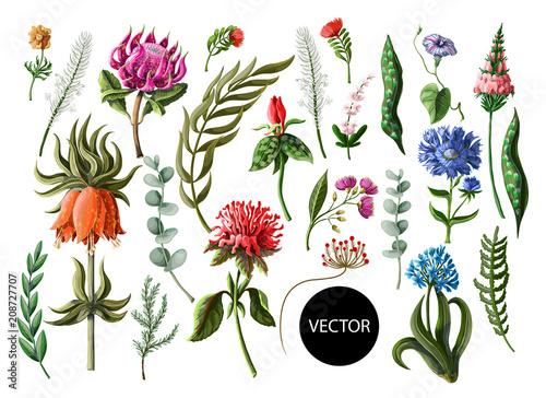 Tropikalni kwiaty w realistycznym i kreskowym stylu odizolowywającym na białym tle. Ilustracji wektorowych.
