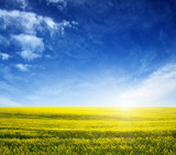 golden field on sky - 208729512