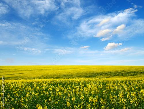 złote pole na niebie