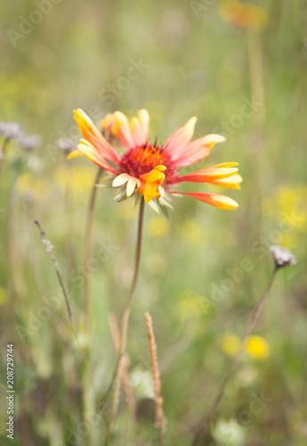 Foto Murales wild yellow flower