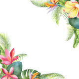 Watercolor vector card with tropical leaves and bright exotic flowers isolated on white background. - 208741580