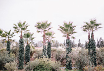 Landscape with palm trees in Anima garden near Marrakech.Morocco.