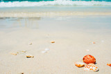 Summer background, seashells by the sea, tropical landscape