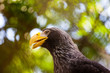 head of a beautiful eagle with a yellow bright beak close-up