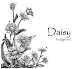 Daisy flowers hand drawing vintage on white background
