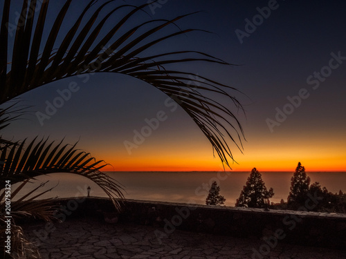 Aluminium Strand Sunset through a palmtree