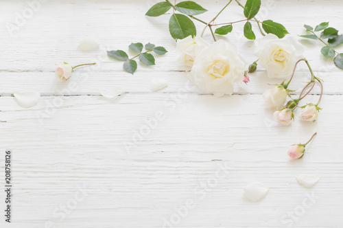 roses on white wooden background - 208758126