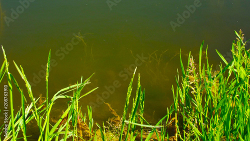 Green grass on the lake.