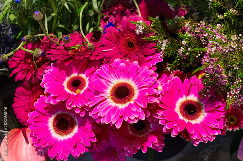 Flower wedding holiday decoration, beautiful purple pink gerbera flowers blooming bouquet - 208766146