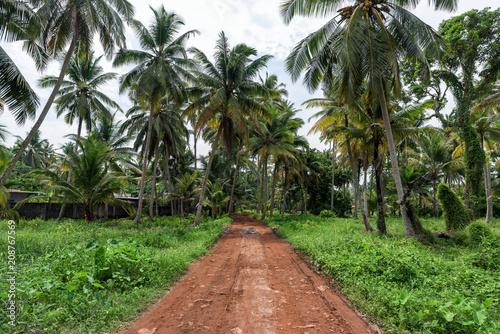 Beautiful coconut palm trees farm in Alappuzha, India.