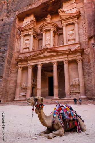 Fotobehang Kameel Camel in front of Treasury Building in Petra in Jordan