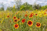 Summer flowers on meadow - 208769761