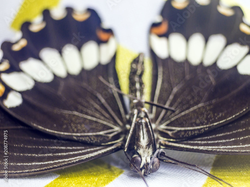 Foto Murales butterfly wings at higher magnification