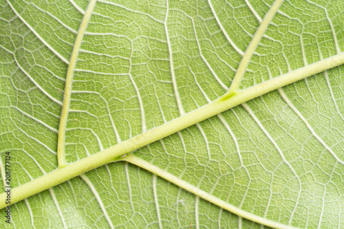close up view of green leaf