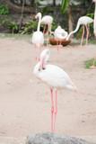 flamingo at the zoo - 208777556